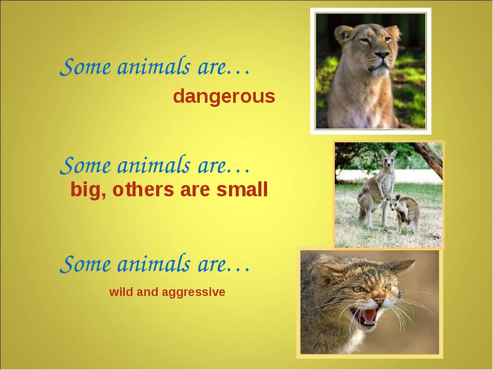 Some animals are… Some animals are… Some animals are… dangerous wild and aggr...