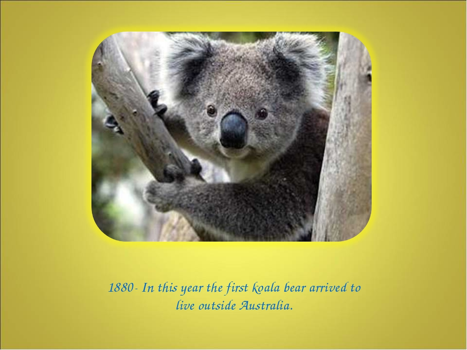 1880- In this year the first koala bear arrived to live outside Australia.