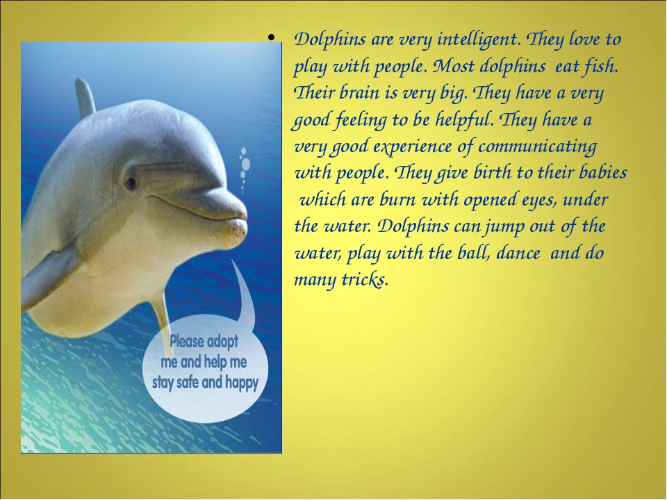 Dolphins are very intelligent. They love to play with people. Most dolphins...