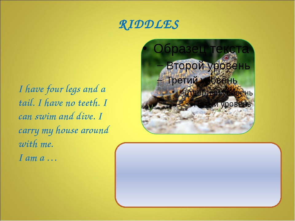 I have four legs and a tail. I have no teeth. I can swim and dive. I carry m...