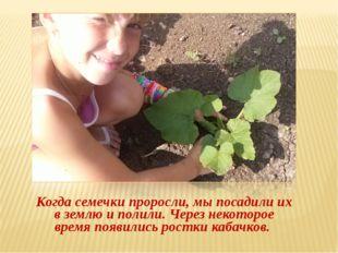 Когда семечки проросли, мы посадили их в землю и полили. Через некоторое вре