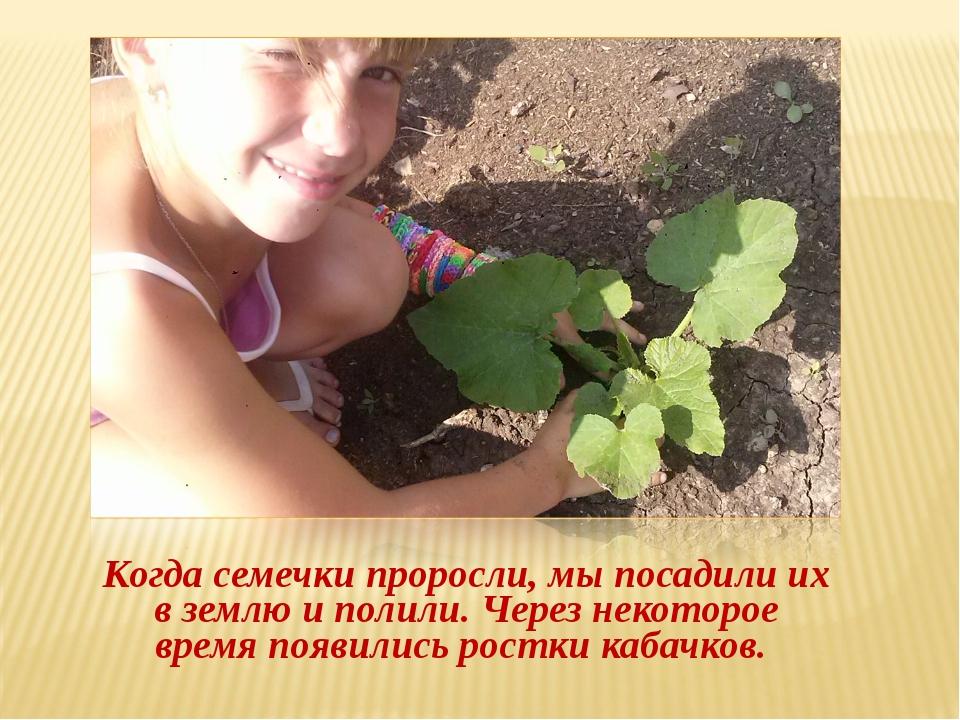 Когда семечки проросли, мы посадили их в землю и полили. Через некоторое вре...