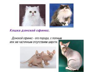 Кошка донской сфинкс. Донской сфинкс - это порода, с полным или же частичным