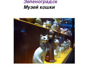Зеленоградск Музей кошки