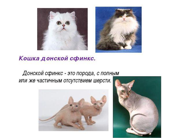 Кошка донской сфинкс. Донской сфинкс - это порода, с полным или же частичным...