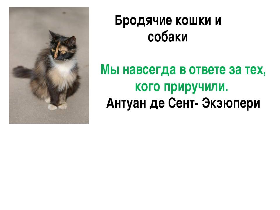 Бродячие кошки и собаки Мы навсегда в ответе за тех, кого приручили. Антуан д...