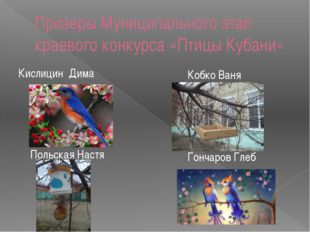 Призеры Муниципального этап краевого конкурса «Птицы Кубани» Кислицин Дима Ко