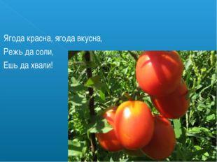 Ягода красна, ягода вкусна, Режь да соли, Ешь да хвали!
