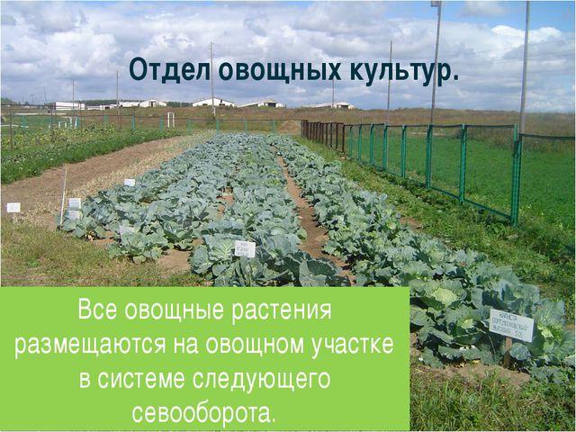 Отдел овощных культур. Все овощные растения размещаются на овощном участке в...