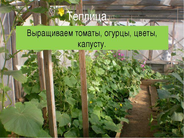 Теплица. Выращиваем томаты, огурцы, цветы, капусту.