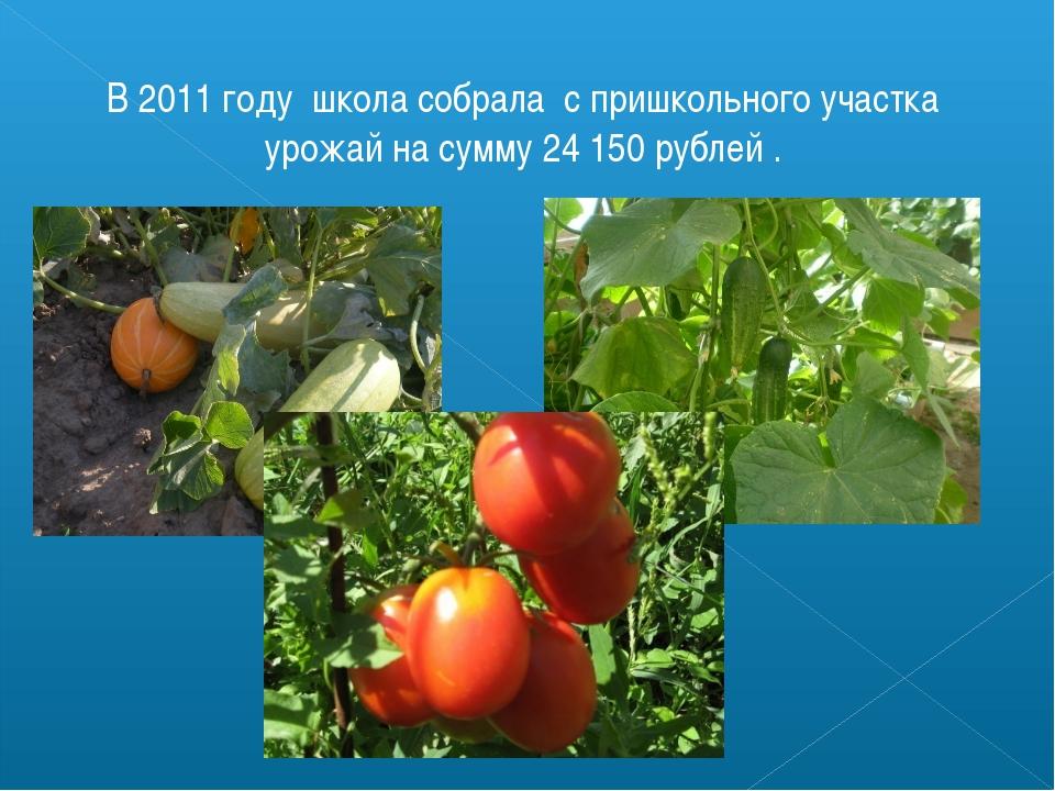 В 2011 году школа собрала с пришкольного участка урожай на сумму 24 150 рубле...
