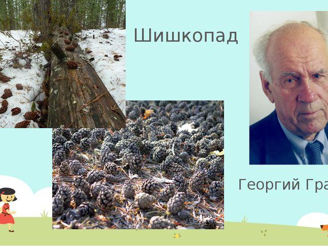 Георгий Граубин Шишкопад