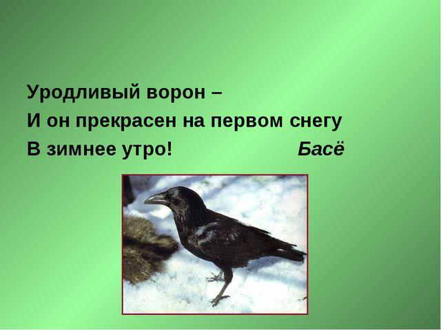 Уродливый ворон – И он прекрасен на первом снегу В зимнее утро! Басё