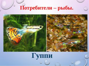 Потребители – рыбы. Гуппи