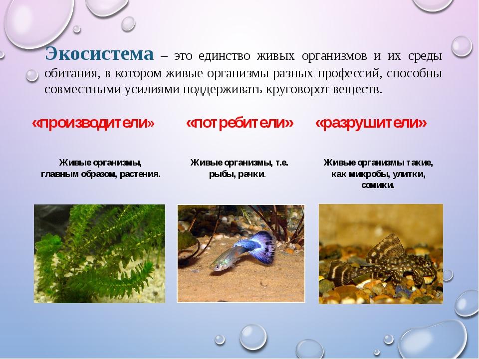 Экосистема – это единство живых организмов и их среды обитания, в котором жив...