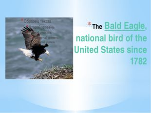 The Bald Eagle, national bird of the United States since 1782