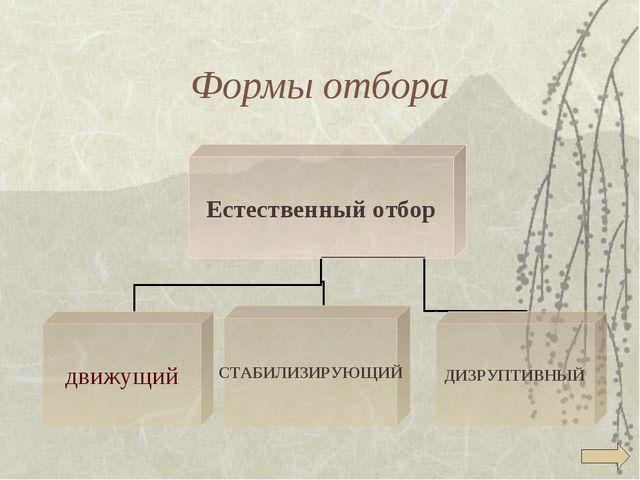 Формы отбора