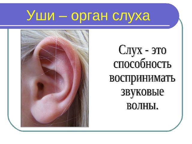 Уши – орган слуха