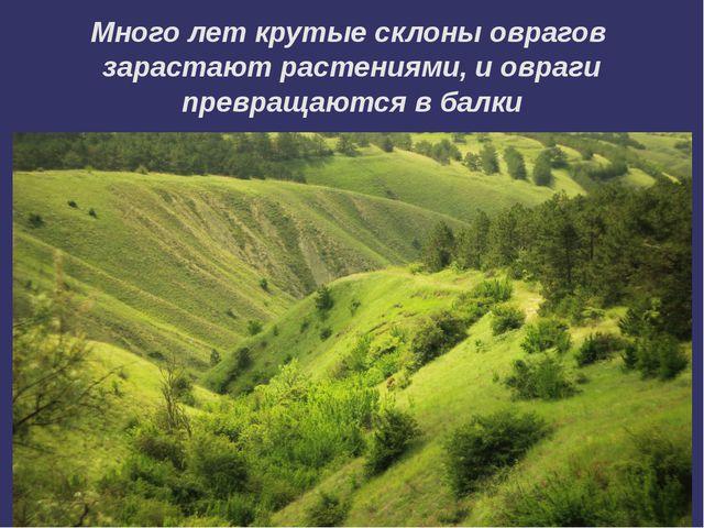 Много лет крутые склоны оврагов зарастают растениями, и овраги превращаются в...