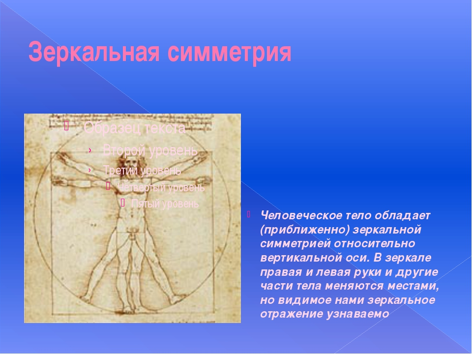 Зеркальная симметрия Человеческое тело обладает (приближенно) зеркальной симм...