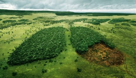 C:\Documents and Settings\Елена\Рабочий стол\green-ads-wwf-lungs.jpg