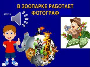 В ЗООПАРКЕ РАБОТАЕТ ФОТОГРАФ ЗВУК 16