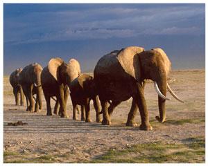 Лучик света - энциклопедия для детей: копытные животные. Слон
