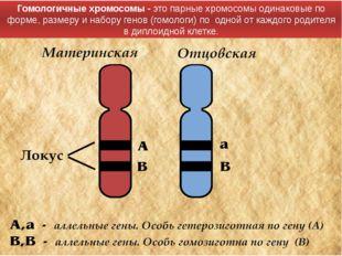 Гомологичные хромосомы - этопарныехромосомы одинаковые по форме, размеру и