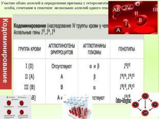 Участие обоих аллелей в определении признака у гетерозиготной особи, сочетан