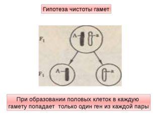 При образовании половых клеток в каждую гамету попадает только один ген из ка