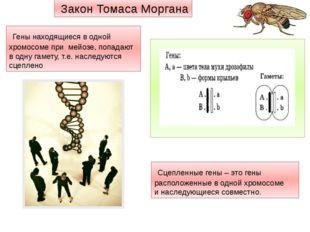 Гены находящиеся в одной хромосоме при мейозе, попадают в одну гамету, т.е.