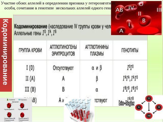 Участие обоих аллелей в определении признака у гетерозиготной особи, сочетан...