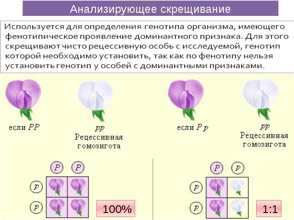Анализирующее скрещивание 100% 1:1