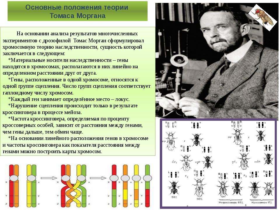 На основании анализа результатов многочисленных экспериментов с дрозофилой...