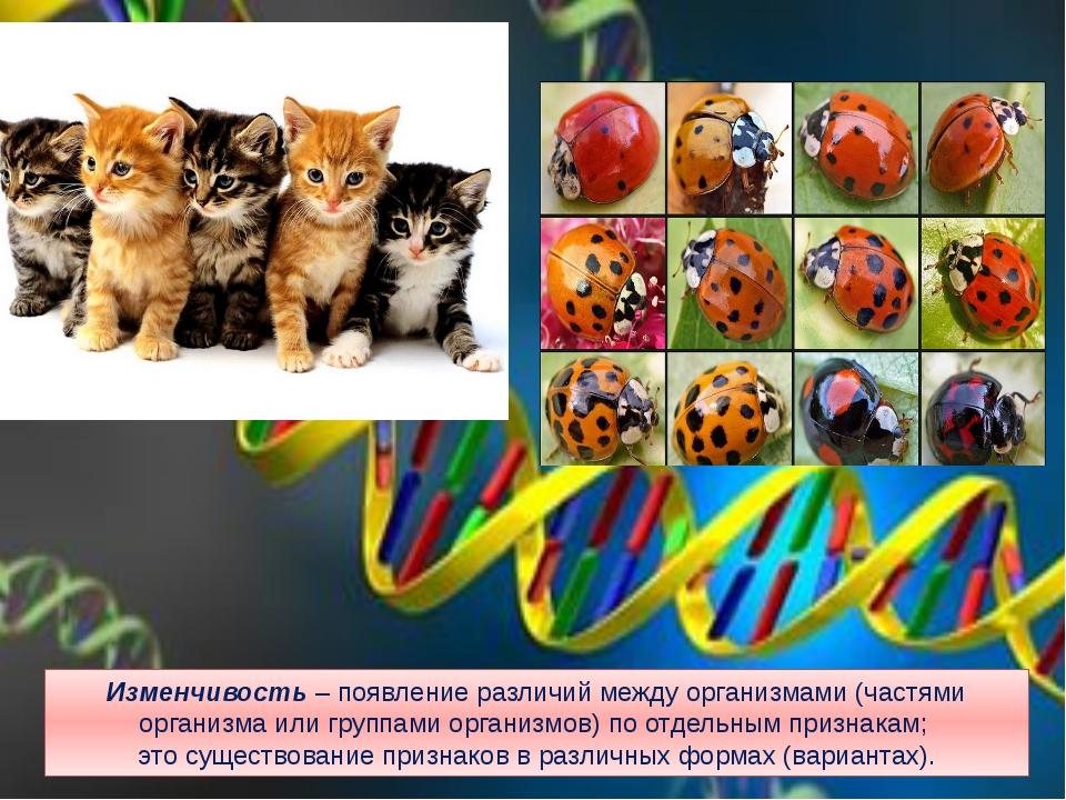 Изменчивость – появление различий между организмами (частями организма или гр...