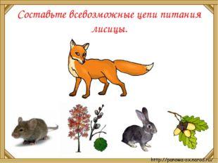 Составьте всевозможные цепи питания лисицы.