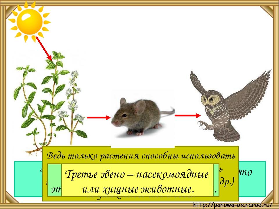 Растения и животные связаны между собой чем