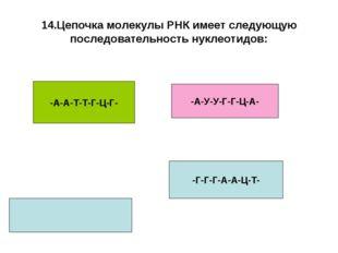 14.Цепочка молекулы РНК имеет следующую последовательность нуклеотидов: -А-А-