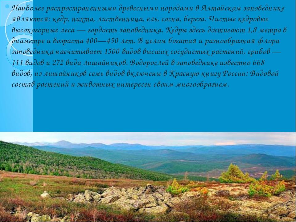 Наиболее распространенными древесными породами в Алтайском заповеднике являют...