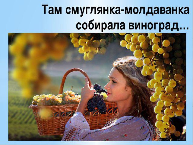 Там смуглянка-молдаванка собирала виноград…