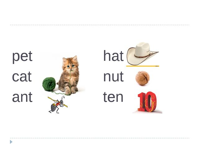 pet cat ant hat nut ten