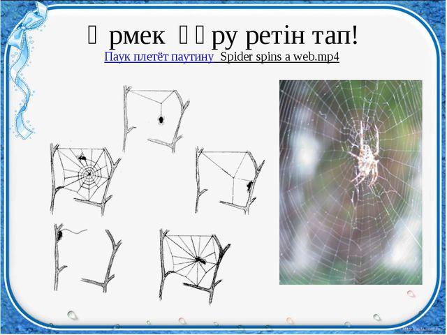 Өрмек құру ретін тап! Паук плетёт паутину Spider spins a web.mp4
