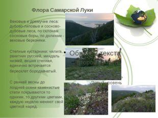 Флора Самарской Луки Вековые и дремучие леса: дубово-липовые и сосново-дубовы