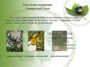 Растения-эндемики Самарской Луки На территории Самарской Луки были впервые о