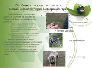 Особенности животного мира Национального парка Самарская Лука 30% наземных п