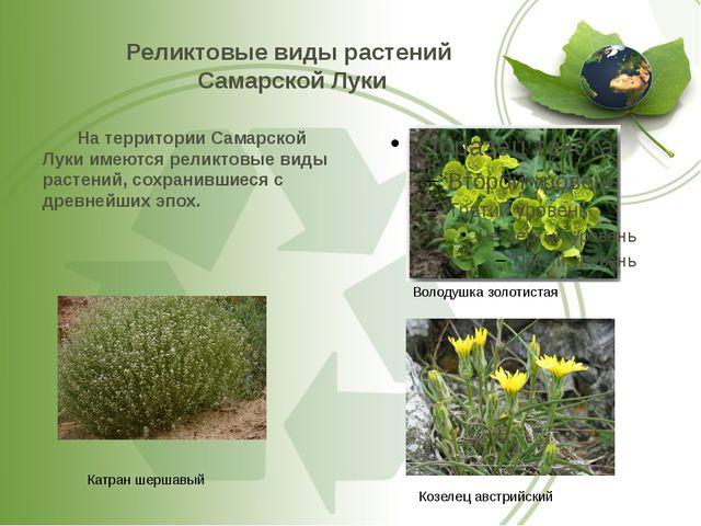 Реликтовые виды растений Самарской Луки На территории Самарской Луки имеются...