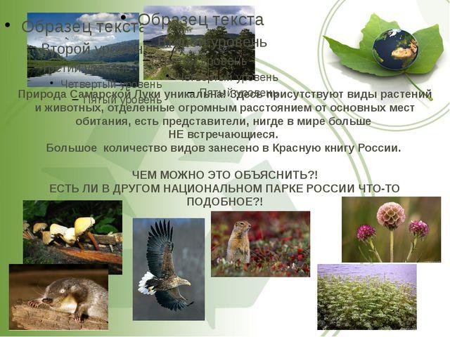 Природа Самарской Луки уникальна! Здесь присутствуют виды растений и животных...