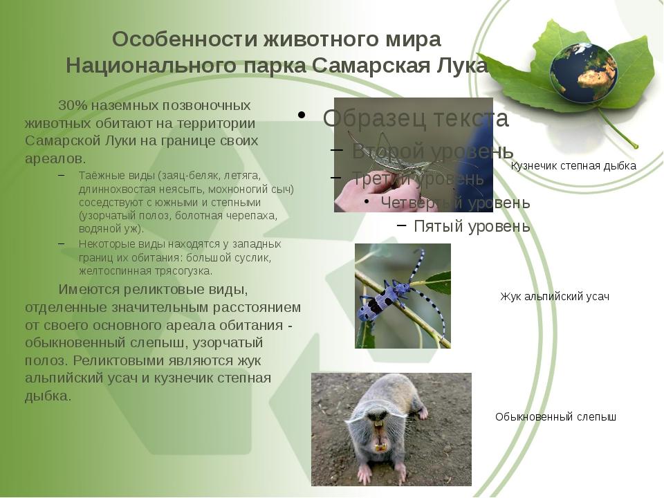 Особенности животного мира Национального парка Самарская Лука 30% наземных п...
