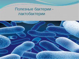 Полезные бактерии - лактобактерии