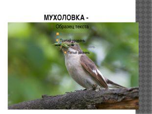 МУХОЛОВКА -
